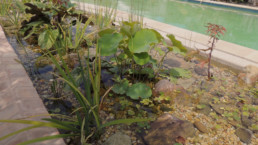 close up of freshwater pool garden