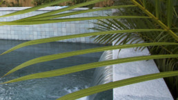 view of pool water fall from behind palm tree