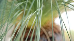 closeup palmtree